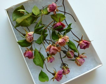 Dried Miniature Rosebuds, Real Dry Flowers, Roses, Wedding, Resin Jewelry, Craft Supply, Table Decor, Centerpieces, 100 Dried Rosebuds