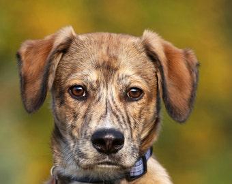 Dog Portrait Photography Greeting Card