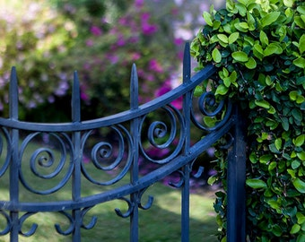 Wrought Iron Gate Garden Print - Charleston South Carolina Photography - Fine Art Home Decor Wall Art - Romantic Feminine Photograph