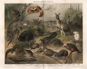 1894 ANTIQUE AUSTRALIAN ANIMALS australian fauna original antique animal color lithograph print
