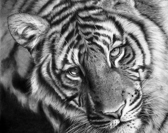 Mini Print - Last Chance To See - Tiger, small signed mounted print taken from original art by Peter Williams