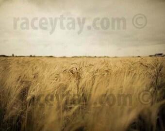 Wheat Field Print, Rustic Decor, Fall, Nature Photography, Gold, Gray, Farm Kitchen, Rustic Kitchen Art