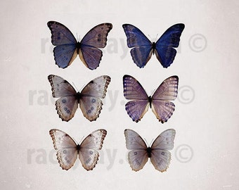 Butterfly Print, Purple, Beige, Blue Morpho, Nature Photography, Girl Nursery Decor, 12x12 Print, Shabby Chic