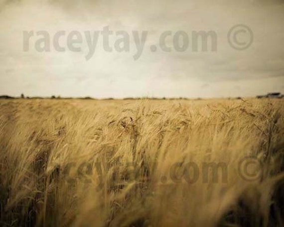 Wheat Field Print, Rustic Decor, Fall, Nature Photography, Gold, Gray, Farm Kitchen, Rustic Kitchen Art