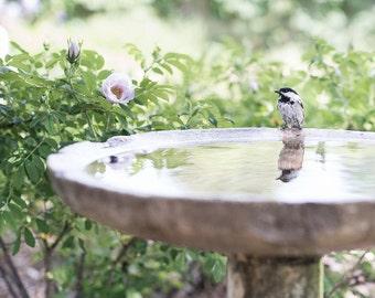 bird reflection in birdbath-springtime photo-garden photography-chickadee  photo (5 x 7 Original fine art photography prints) FREE Shipping)