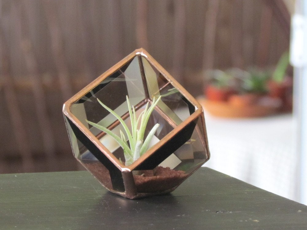 Geometric air plant holder stained glass terrarium for Geometric air plant holder