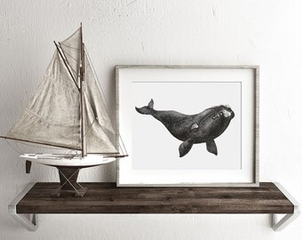 Right Whale Watercolor Print, Whale art, Whale print, Whale painting, Whale watercolor print, Ocean Art, Right Whale Painting, Beach Decor