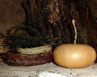 Harvest Gourd and Herbs, Southwest Art, 5x7 Matted Photograph, Altered Art, Autumn