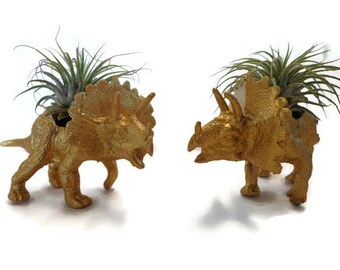 Set of 2 small gold dinosaur planters with mini air plants.