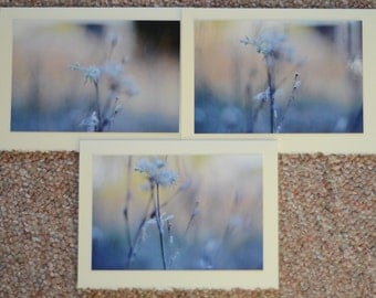 first blush / blank photo greeting cards - set of 3