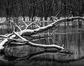 Grand River Fallen Tree during Winter by Johnson Park in Grand Rapids Michigan No.BW0072 A Black and White Fine Art Landscape Photograph