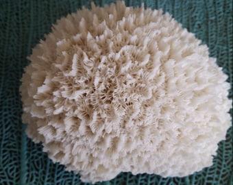 Resin Eco Friendly Faux White Brain Coral Display for Coastal DIY Decorating, Beach Home Decor, Weddings, Centerpieces, Aquarium Accents