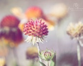 Macro photography nature photography Fall decor pastel wildflower wall art  Fine Art Photography Print
