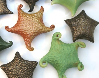 Carved porcelain sea star in green glaze
