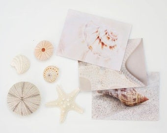 Seashell Note Card Set, Nautical Stationary Set, Beach Note Cards, Blank Notecard Set, Custom Thank You Cards, Seashell Photo Cards