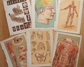 Lot of Bookplate Medical Textbook Pages Color Brain Muscles Drawings Skeleton Prints Art