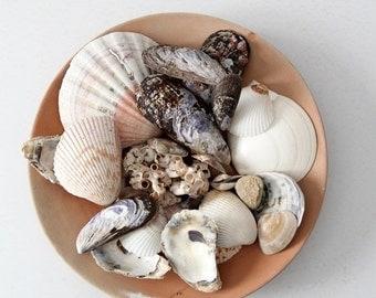 SALE vintage seashell collection, mixed sea shells