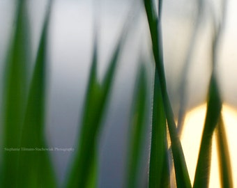 Spring, Freelensing, Freelensed, Grass, Reverse Macro, Nature Photography, Print, Canvas Wrap