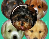 Digital Collage of Puppies -48 1x1 Inch Circle JPG images