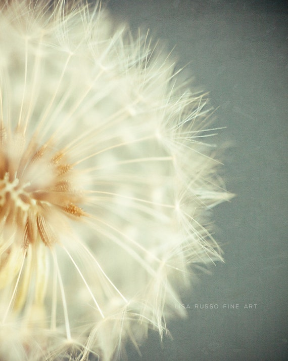 Dandelion Print or Canvas Wrap, Dandelion Print, Dandelion Photography, Dandelion Nursery Decor, Vertical, Blue Cream Ivory, Girl's Room.