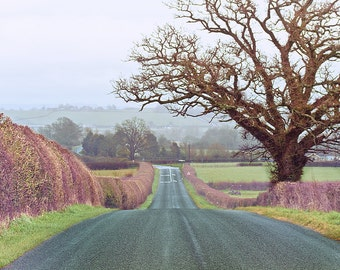 "British landscape photography, British home decor, nature photography - ""The Road Home"""