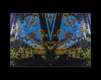 Mirror 1712 16x12_brilliant fall leaves blue sky_ mirrored abstract photography_autumn forest_ Loree Harrell The Mirror Project_in stock