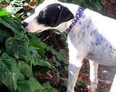 Pet Snowman Dog Collar, Adjustable Dog Collar, Fabric & Nylon Dog Collar - Adorable Pet Snowman Dog Collar Blue