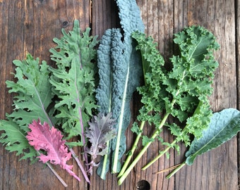 Kale Mixed Varieties Carolyn's Best Mix of Heirloom and Open Pollinated Kale Seeds