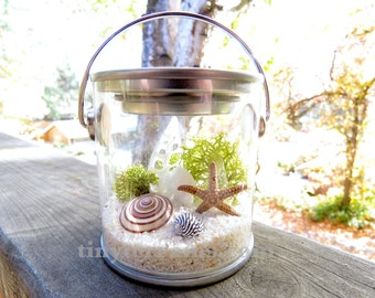 Free Shipping - Lichen Terrarium , Small Beach Pail Terrarium: White, Natural, or Black Sand