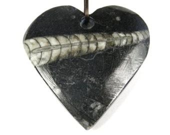 Orthoceras Fossil Heart Pendant - 36mm x 35mm x 6.5mm - B4568