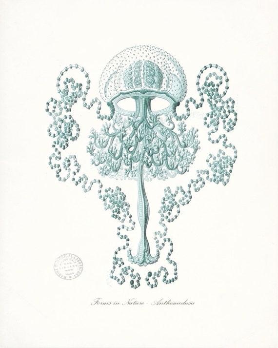 Coastal Decor Fantasy Sea Life Jelly Fish (Anthromedusa) Giclee Art Print  No. 1 8x10