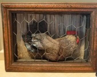 Hen In A Chicken Wire Coop NEW ITEM
