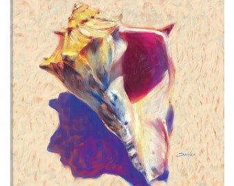 iCanvas Conch-Shell Study Gallery Wrapped Canvas Art Print by Mike Savlen