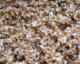 29gr/1oz HORSE CHESTNUT Dried herb ONLY Blossom Flowers Herbal Aesculus hippocastanum herbs