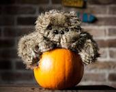 Stripey Spider Plush - Soft Sculpture, Fiber Art, Art Toy, Plush, Halloween