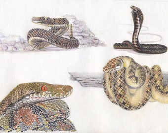 Snake, python, 9x12 marker and colored pencil, drawing and illustration, art & collectibles earthspalette