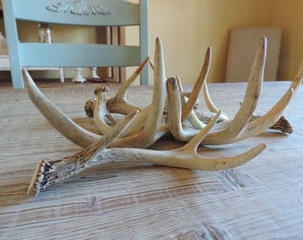 SALE! Vintage deer antlers / farmhouse, rustic, country decor, shabby cottage