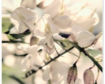 White Blooms on a Sunny Day Macro Nature Photography