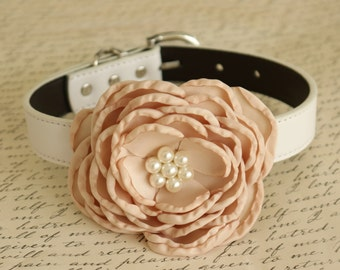 Champagne Floral Wedding dog collar, Dog birthday, Pet wedding, flower with Pearls, Champagne wedding