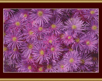 Pink Aster Blooms Cross Stitch Pattern