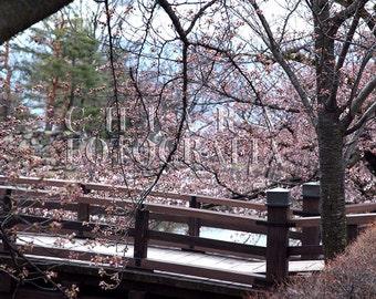 Cherry Blossom Art, Japan Photograph, Kyoto Photography, Botanical Art, Sakura, Fine Art Photography, Japan home decor, Travel Photography