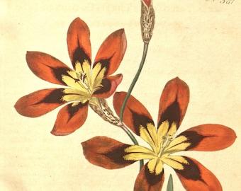 Botanical art, Flower print, Wall decor, Nature art, Nature decor, Flower print art, Antique print, Flower art, Vintage print, Nature, 381