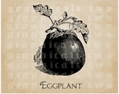 Vegetable antique Eggplant seed packet image transfer Instant digital download graphic for iron on fabric burlap decoupage pillow  No. gt261