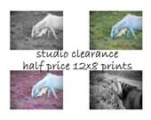 SALE - Horse home decor, equine art, horse photography, girls room art, nursery decor, 12x8 half price