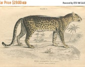 SALE SALE, Antique Hand Colored Steel Engraved 1800's Book Plate Print Jardine Natural History Library Vol XVI Mammalia Lions Tigers The Leo