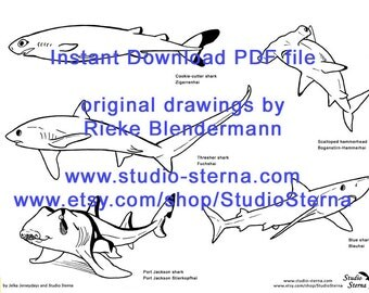 Shark drawing instant download PDF Hammerhead Great White Blue zebra shark file outlines pattern template stock study animal sea ocean fish