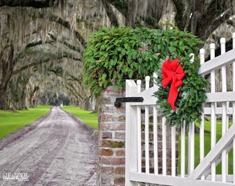 Tomotley Plantation Christmas Wreath / Trees Moss South Carolina Branches Canopy Fine Wall Art Gallery Picket Fence