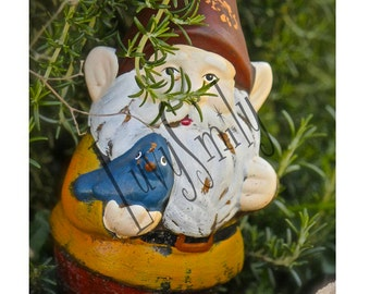 Gnome in Rosemary Photograph