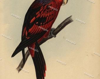 1850 Antique Natural History  engraving of Bird printsOriginal Hand Colored nature print natural history-Animal print- Loraine