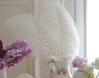 French Vintage Feathers